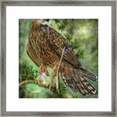 Hawk In The Evergreens Framed Print by Darren Cannell