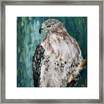 Hawk Framed Print by Maria Langgle