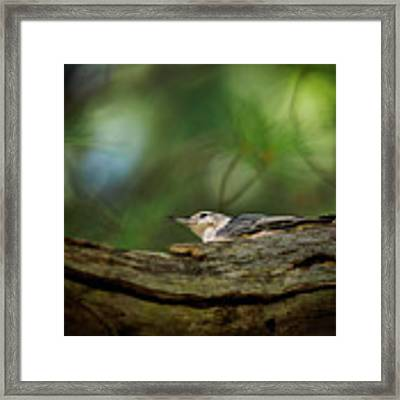 Hiding From The Hawk Framed Print by Bob Orsillo