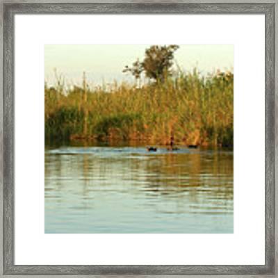 Hippos, South Africa Framed Print by Karen Zuk Rosenblatt