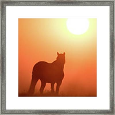 Horse Silhouette Framed Print by Wesley Aston
