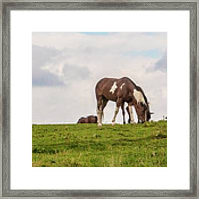 Horses And Clouds Framed Print by D K Wall