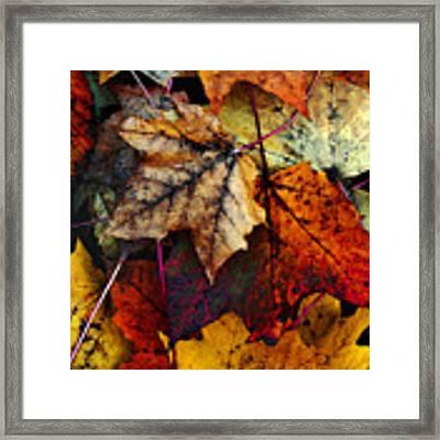 I Love Fall 2 Framed Print