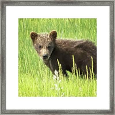 I Love Me A Teddy Bear Framed Print by Belinda Greb
