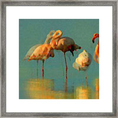 Impressionist Flamingo Abstract Framed Print by Shelli Fitzpatrick