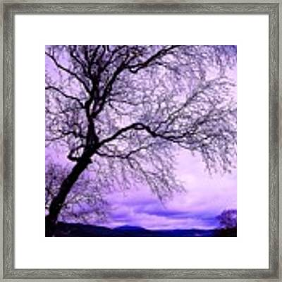 In Touch Framed Print by HweeYen Ong