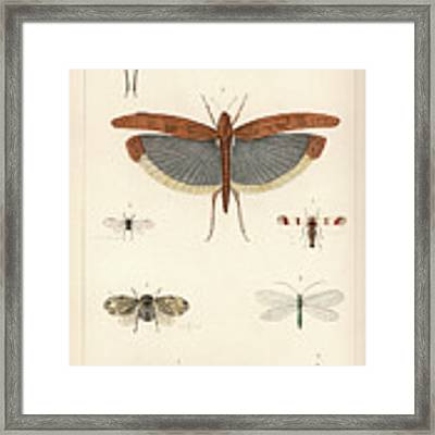 Insects, Plate IIi Framed Print by Antoine Sonrel