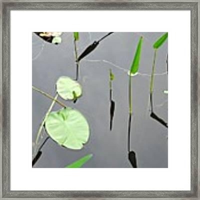Izzy's Pond Close Up Framed Print by AnnaJanessa PhotoArt