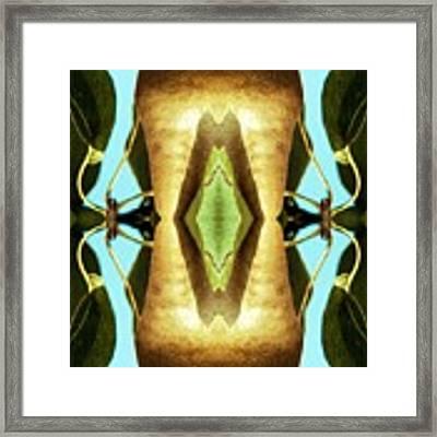 KV5 Framed Print by Writermore Arts