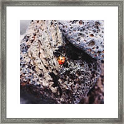 Ladybird  Framed Print by Martina Uras