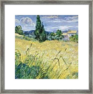 Landscape With Green Corn Framed Print by Vincent Van Gogh