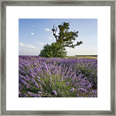 Lavender Provence  Framed Print by Juergen Held