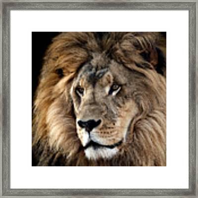 Lion King Of The Jungle 2 Framed Print by James Sage