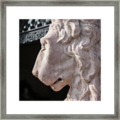 Lion's Gaze Framed Print by Todd Blanchard