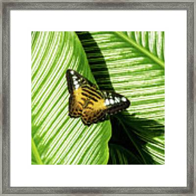 Little Butterfly On Big Green Leaves Framed Print by Bob Slitzan
