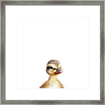 Little Duck Framed Print by Amy Hamilton