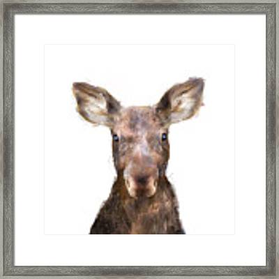 Little Moose Framed Print