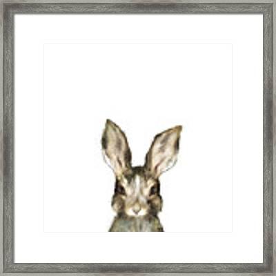Little Rabbit Framed Print by Amy Hamilton