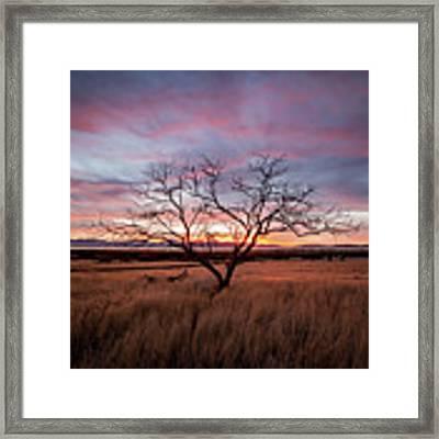Little Tree Sunset Framed Print by Wesley Aston