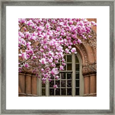 Magnolia Arch Framed Print by Susan Cole Kelly