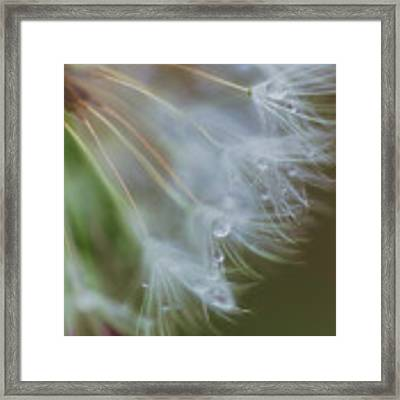 Make A Wish Framed Print by Beth Sawickie