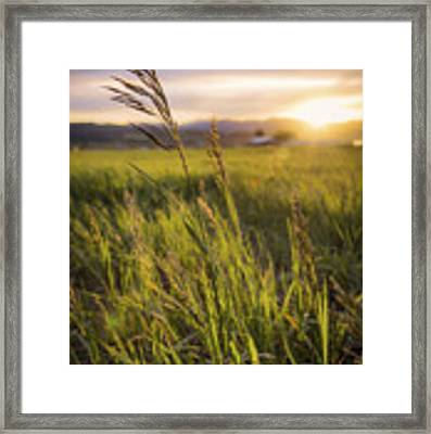 Meadow Light Framed Print by Chad Dutson