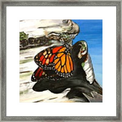 Monarch On Birch Framed Print by Meghan OHare