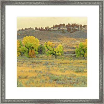 Montana Cottonwood Reverie Framed Print by Cris Fulton