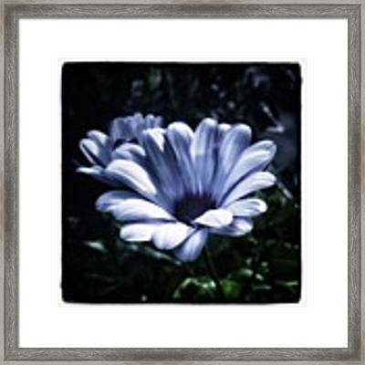 Moonlit Petals. From The Beautiful Framed Print by Mr Photojimsf