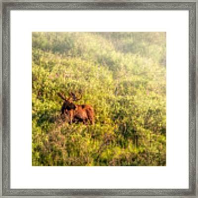 Moose In The Mist Framed Print by Claudia Abbott