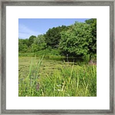 Mossy Pond Framed Print by AnnaJanessa PhotoArt
