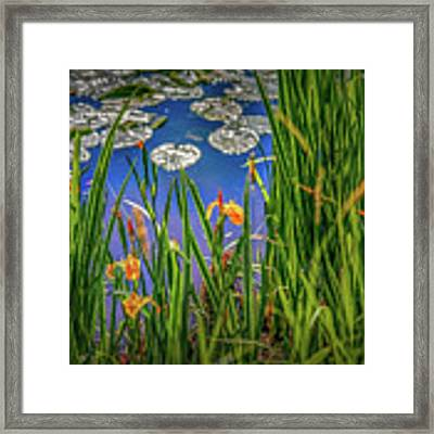 Nature's Window #h5 Framed Print by Leif Sohlman