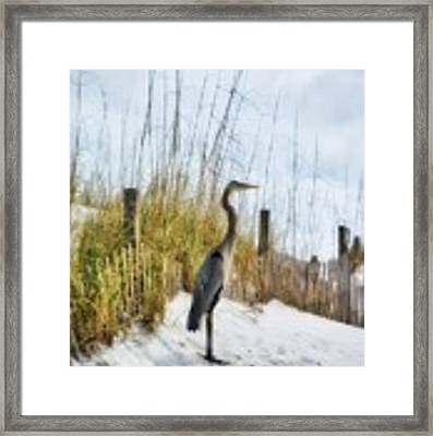Norriego Point Heron Framed Print by Mel Steinhauer