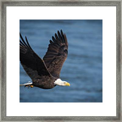 On A Mission Framed Print by Cindy Lark Hartman