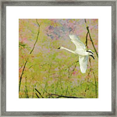On The Wing Framed Print by Belinda Greb