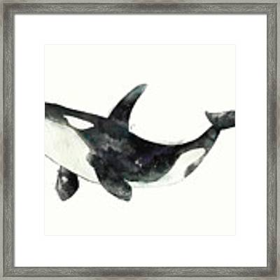 Orca From Arctic And Antarctic Chart Framed Print