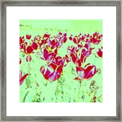 Passion Framed Print by HweeYen Ong