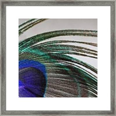 Peacock Feather Art Framed Print by Angela Murdock