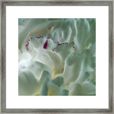 Peony Flower Energy Framed Print by Beth Sawickie