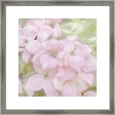 Pink Dogwoods Framed Print by Gigi Ebert