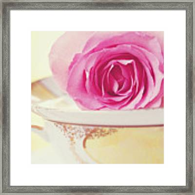 Pink Rose And Teacup Framed Print by Kim Fearheiley