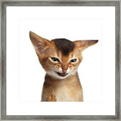 Portrait Of Kitten With Showing Middle Finger Framed Print by Sergey Taran
