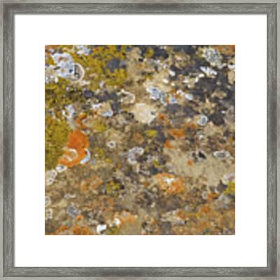 Prairie Pattern Framed Print by Cris Fulton