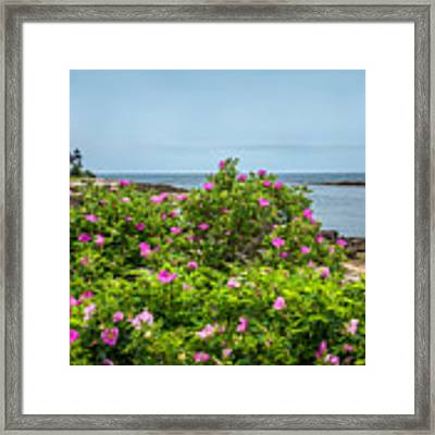 Prospect Harboa Roses Framed Print by Susan Cole Kelly
