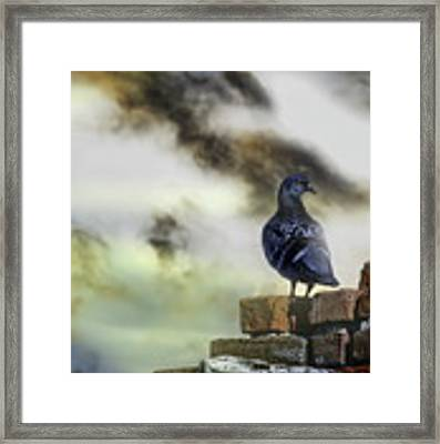 Proud To Be A Pigeon Framed Print by Bob Orsillo