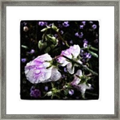 Rain Kissed Petals. This Flower Art Framed Print by Mr Photojimsf
