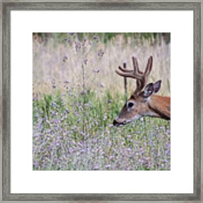 Red Bucks 4 Framed Print by Antonio Romero