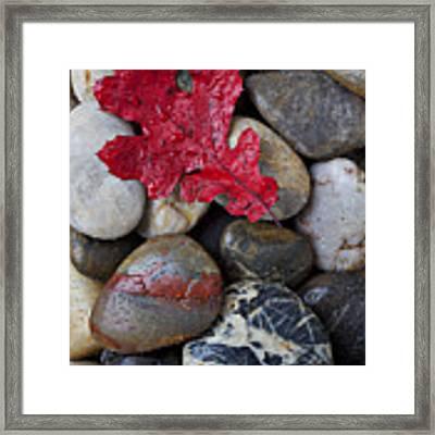 Red Leaf Wet Stones Framed Print