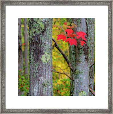 Red Leaves Framed Print by Gary Lengyel