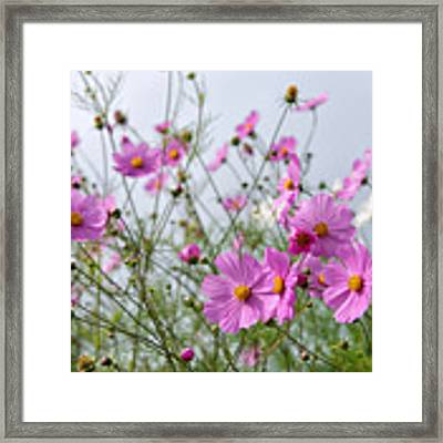 Row Of Pink Framed Print by Yew Kwang